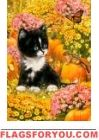 Kitten and Pumpkins House Flag