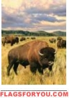 Grazing Bison Garden Flag